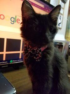 Leah's female kitten Jax